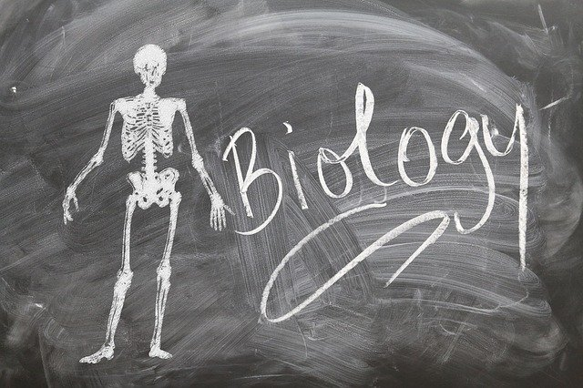 "Blackboard with the illustration of a skeleton and the word ""biology."""